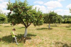 Apple trees orchand and kid royalty free stock image