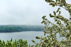 Apple trees, tree, spring, flower, flowers, tree, fog, lake, Shore Royalty Free Stock Photo