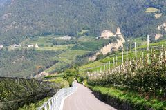 Apple trees and Tyrol Castle in Tirol, South Tyrol. Italy Stock Photos