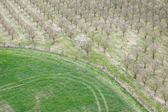Apple trees in winter before the bloom. Stock Photo