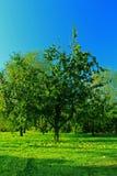 Apple-tuin Royalty-vrije Stock Foto