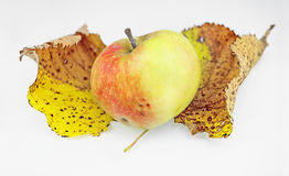 Apple on two autumn leaves Stock Image