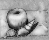 Apple and two shells - still life. Still life with an apple and two shells on a piece of choth. Pencil drawing, sketch Stock Photography