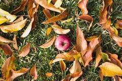 Apple und Blätter auf Gras stockfotos