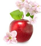 Apple und Blüte Lizenzfreie Stockfotografie