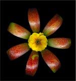 Apple und Blume Lizenzfreie Stockfotografie