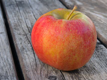 Apple Varieties CHAMPION Royalty Free Stock Images