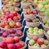 Apple Varieties On Display UK Stock Photography