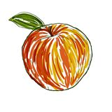 Apple in vector royalty free illustration