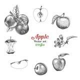 Apple vector desenho ajustado da mão Fotografia de Stock