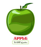 Apple vector drawing Stock Photo