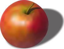 Apple. Vector illustration of realistic apple Royalty Free Stock Image