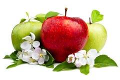 Apple vermelho na frente de duas maçãs verdes Fotografia de Stock
