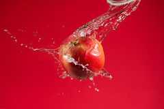 Apple vermelho no fundo vermelho Imagem de Stock Royalty Free
