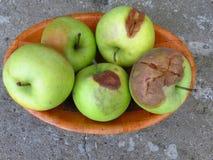 Apple-verrotting en andere paddestoelen van de fruitverrotting Rotte appelen stock afbeeldingen