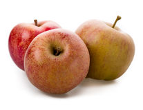 Apple-Vielzahl, Boskop Stockfotos