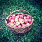 Apple village Royalty Free Stock Photos