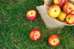 Apple vintage background, wicker basket on green grass, top view with space for writing stock photo