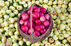 Apple in vintage basket and on garden grass Royalty Free Stock Images