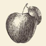 Apple Vintage Engraved Illustration Hand Drawn Royalty Free Stock Photos