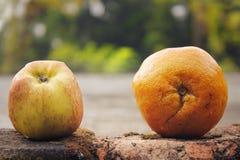 Apple vs apelsinen royaltyfria bilder