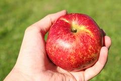 Apple w ręce Zdjęcia Royalty Free