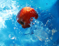 Apple in water. Red and yellow apple with blue water,  bead arround the apple Stock Images