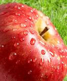 Apple with water drops Stock Images