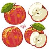 Apple, wektor Zdjęcia Stock