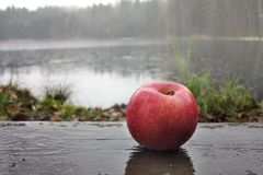 Apple on wet boards against the background of the lake. And fores Stock Images