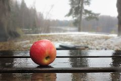 Apple on wet boards against the background of a fores. Apple on wet boards against the background of the lake and fores Stock Photo