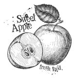 Apple on a white background. sketch Stock Image