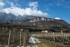 Apple and Wine Plantages in Dolomites, Tyrol Stock Image