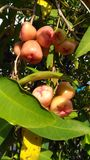 Apple woda Fotografia Royalty Free