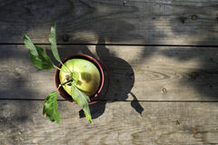 Apple on wood Stock Photo