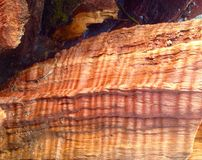 Apple wood texture Stock Photography