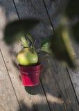 Apple on wooden floor Stock Photo