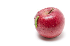 Apple and worm Royalty Free Stock Photos