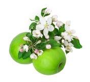 Apple y flor de la manzana Fotos de archivo libres de regalías