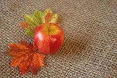 Apple y hojas. Foto de archivo