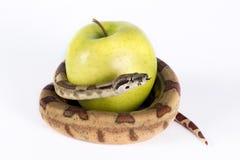 Apple y serpiente. Fotografía de archivo libre de regalías