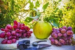 Apple y uvas en la tabla en un jardín con las podadoras, aún vida Imagenes de archivo