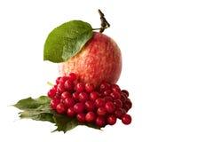 Apple y viburnum rojos de las bayas en un fondo blanco Foto de archivo