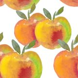 Apple with yellow fresh green leaves. watercolor illustration Stock Images