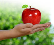 Apple on your hands Royalty Free Stock Photography