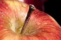 Apple zakończenie up obraz royalty free