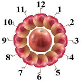 Apple zegar Zdjęcie Stock