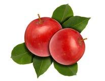 Apple zwei rot und Blätter Stockfoto