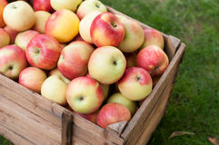 Applel harvest Stock Images