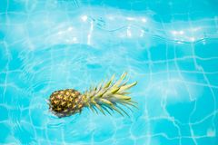 Applepine en el agua azul fotos de archivo